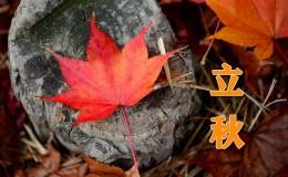 今日立秋–二十四节气英语知多少?