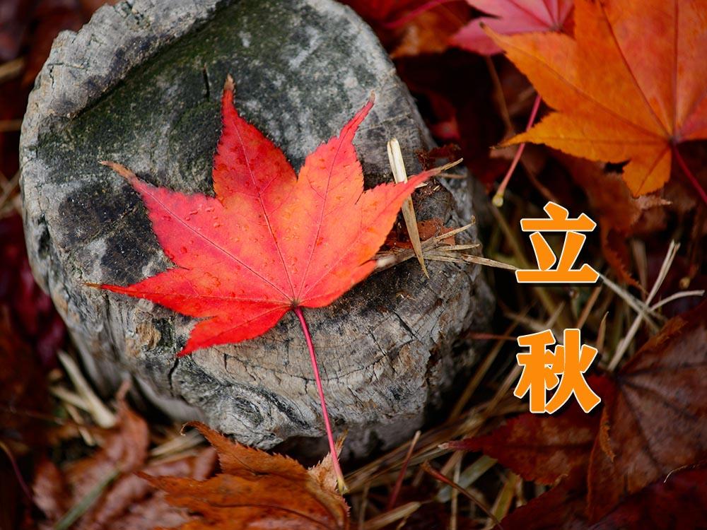 今日立秋--二十四节气英语知多少?